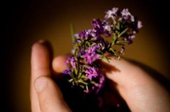 Korsarz -  przypinka z kwiat�w na nadgarstek