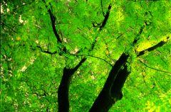 Zielone �wiat�o dla przyrody