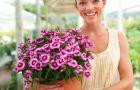 Jak naturalnie zadba� o kwiaty?