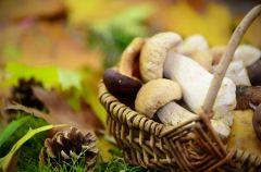 Warto�ci od�ywcze grzyb�w - co zawieraj� i ile maj� kalorii