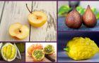 Nietypowe owoce tropikalne