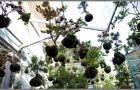 Ogr�d na wysoko�ciach. Wisz�ca aran�acja String Gardens