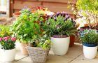 Co zrobi� z kwiatami doniczkowymi podczas urlopu?