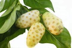 Owoc noni - w�a�ciwo�ci lecznicze i zastosowanie
