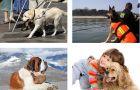 Jakie zawody wykonuj� psy?