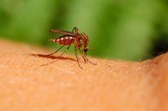 Naturalne metody na u��dlenia i uk�szenia owad�w
