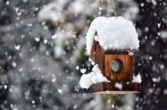 10 fakt�w o zimowym dokarmianiu ptak�w
