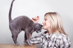 Dlaczego kot nie jest pieszczochem?