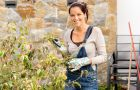Jak zabezpieczy� kwiaty przed zimnem?