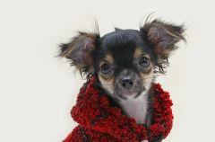 Sweterek dla psa - zr�b to sama!