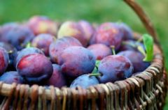 Owoce letnie: �liwki