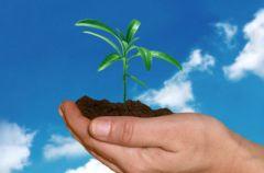 Herbaciany cykl - dobrodziejstwa krzewu herbacianego