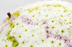 Chryzantema - aran�acje kwiatowe wiosna 2010