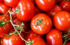 Pomidor!