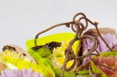 Chryzantema pachn�ca wiosn�