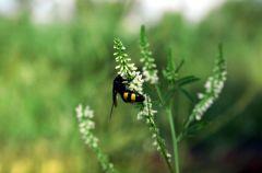 Ochrona przed owadami - kr�tki poradnik