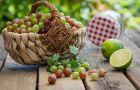 Kuchnia na s�odko - Agrestowe desery