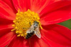 Produkty pszczele - czy�by era nowych lek�w?