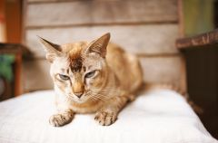 Jak oswoi� p�ochliwego kota?