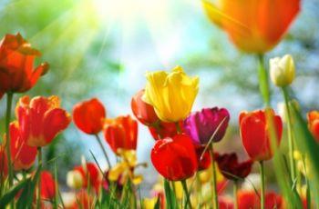 Mowa kwiat�w - romantyzm