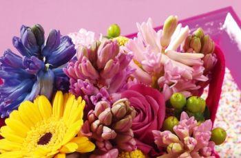 Hiacynty pachn� wiosn� - kompozycje z hiacynt�w