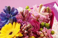 Hiacynty pachn� wiosn�