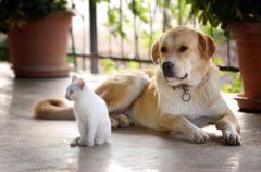Kot czy pies - jakiego zwierzaka wybra�?