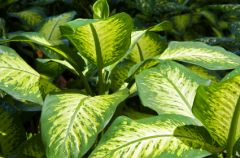 Rosliny doniczkowe wystylizuj� Tw�j dom