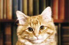 Wielki kot w ma�ym mie�cie - We-Dwoje recenzuje