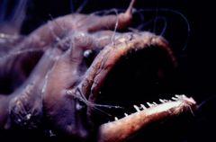 Potwory z morskich g��bin