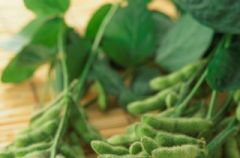 Soja - nasiona na zdrowie!