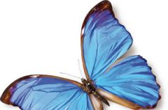 Linell Comfort podpaski delikatne jak skrzyde�ka motylka