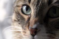 Jak �y� z kotem i nie zwariowa� - poradnik frustrata