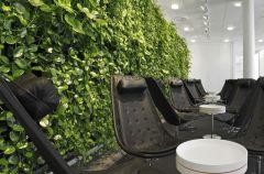 �ciany zieleni Green Fortune