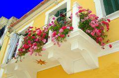 Jakie kwiaty wybra� na balkon?