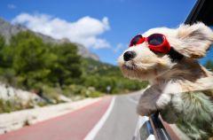 Co zrobi� z psem na urlopie?