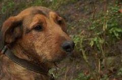 Jak pom�c psom przetrwa� Sylwestra?