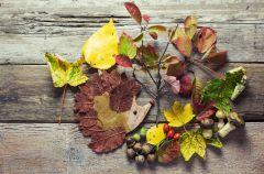 Co mo�na zrobi� z jesiennych li�ci?