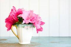 Przedpok�j pe�en kwiat�w