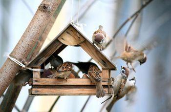 Domki dla ptak�w - jesienne inspiracje z mark� JULA