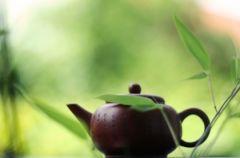Zielona herbata - �r�d�o zdrowia i urody