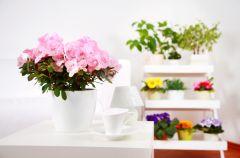 Kwiaty proste w uprawie