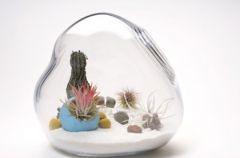 Lit�ll i jego niesamowite terrarium