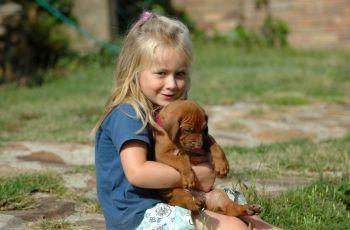 Chomik, kot, pies... Jakie zwierz� dla dziecka? - p�e� psa