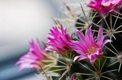 Najpi�kniejsze kaktusy, kt�re warto mie�!