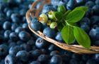 Owoce letnie: Jagody