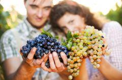 Winogrona - kalorie i w�a�ciwo�ci dla zdrowia