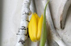 Wiosenne aran�acje kwiatowe