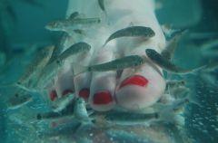 Naturalny pedicure Dr Fish