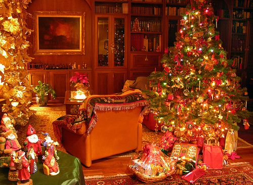 Wybieramy choinkę na Boże Narodzenie